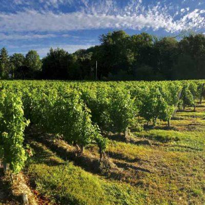 嘉禧酒莊的葡萄園