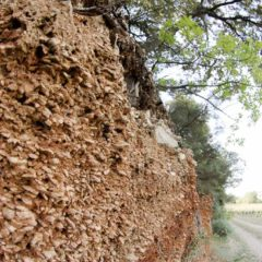 多瑪士.嘉薩酒莊葡萄園特有的冰川土,富含礦物質和大塊礫石,透水性好