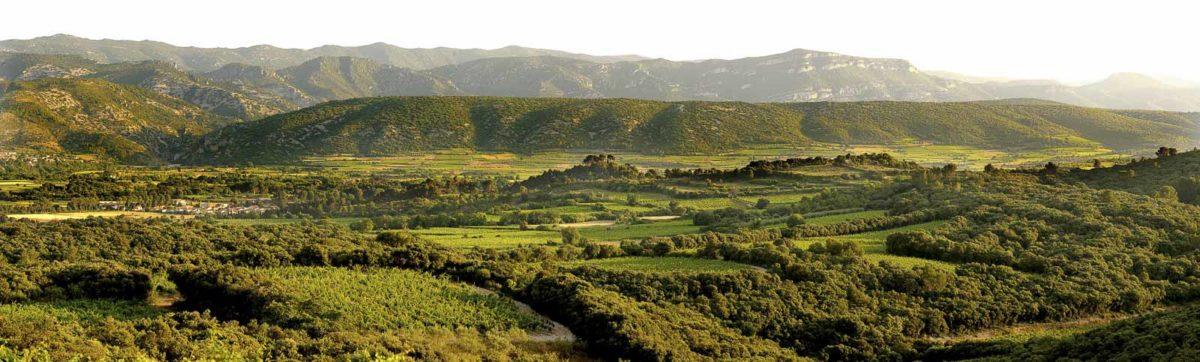 嘉薩山谷和被灌木叢所包圍的葡萄園