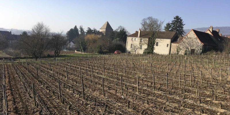 Santenay 酒莊Lucien Muzard & Fils 的紅酒是區內之最