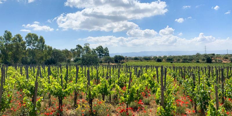 I Vigneri在西西里東南部的一員 Azienda Agricola Daino